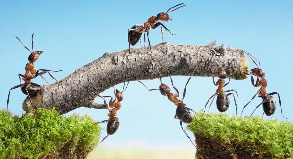 Formazione Lavoro: Team Building Esperienziale