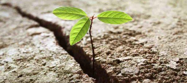 Resilienza e Ricerca di lavoro